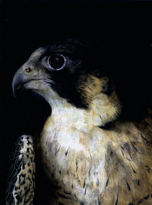 Peregrine falcon, acrylic