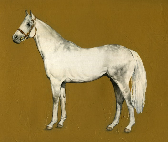 White horse, watercolour and acrylic