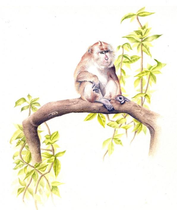 Monkey, watercolour