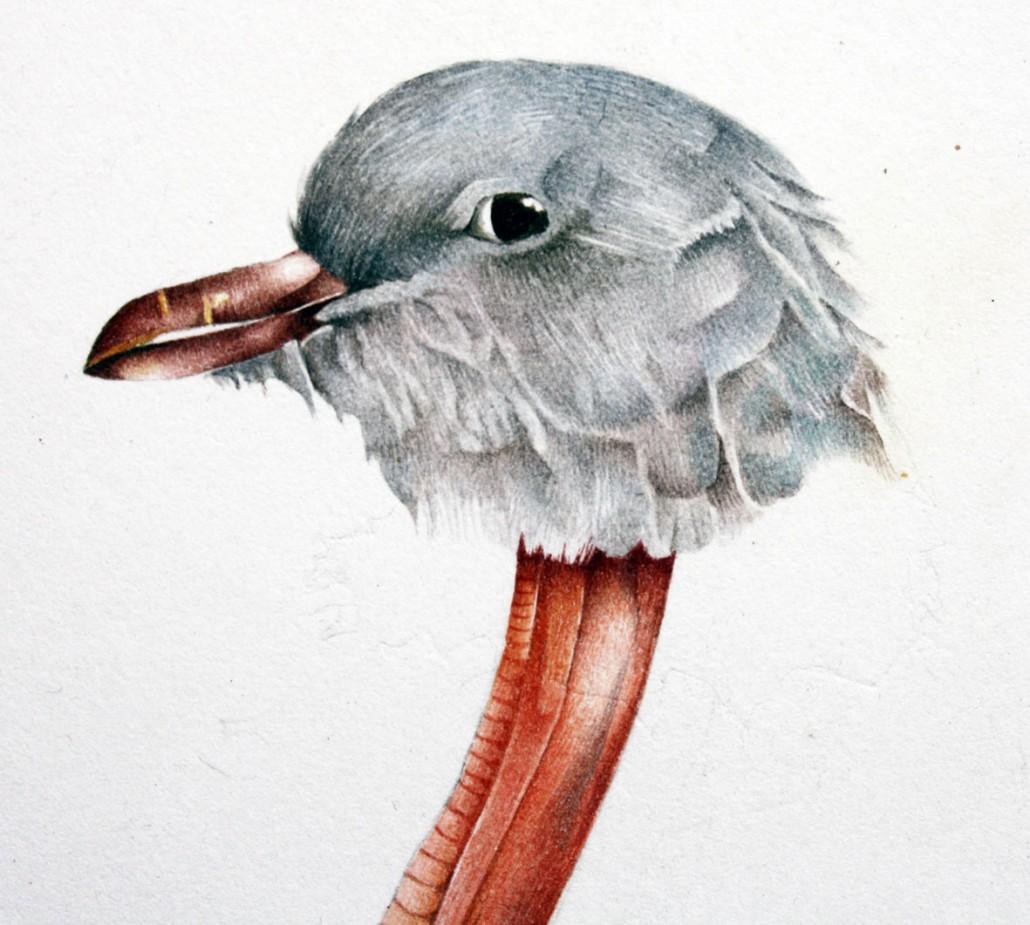 Pigeon detail, watercolour