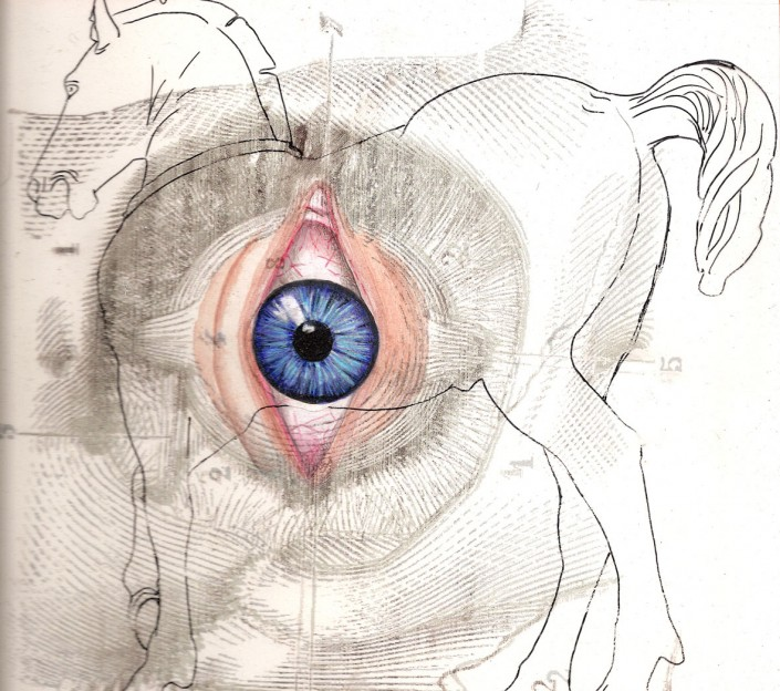 Eye, watercolour and linework