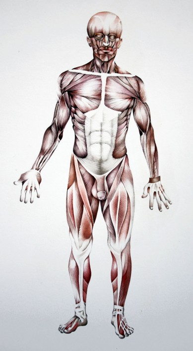 Muscle man, watercolour