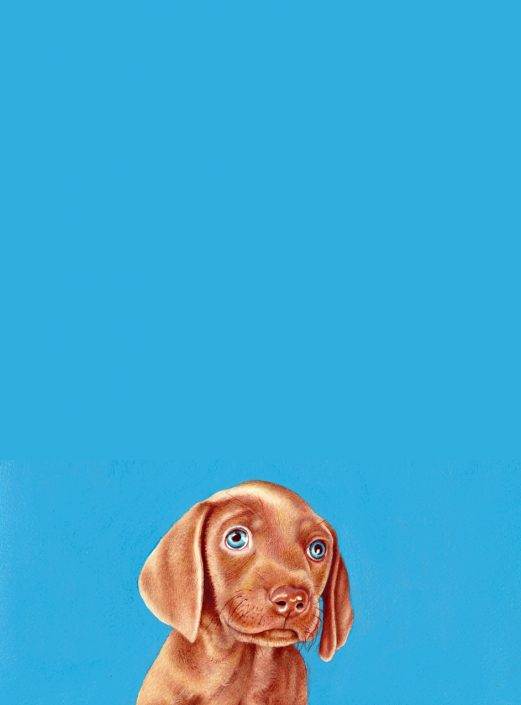 Weimaraner puppy - watercolour with blue acrylic background 2016