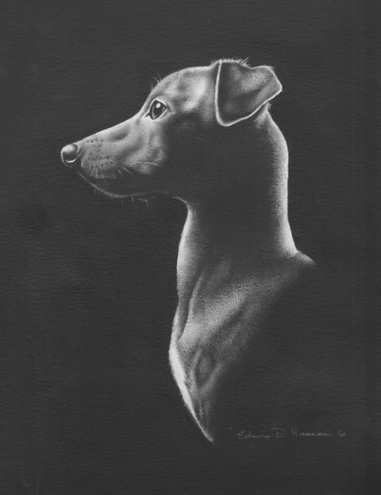 Whippet - B&W watercolour 2016