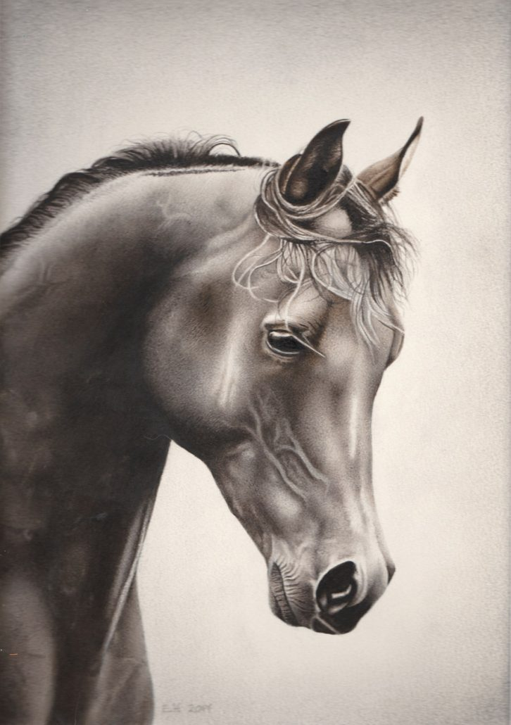 horse, watercolour 2017