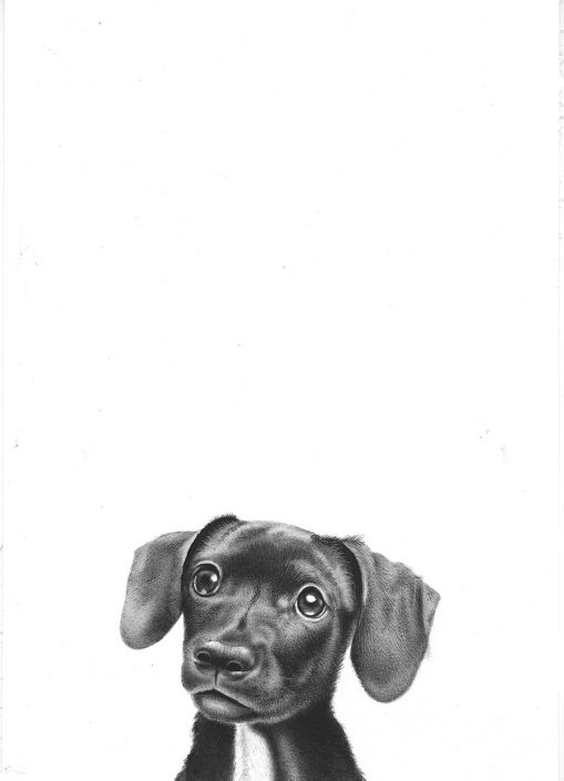 Little dog - B&W watercolour